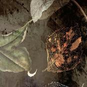 Papier peint floral Night Flowers 200x280